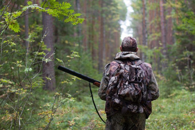 terre a bois quebec